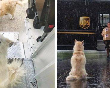 Los repartidores de UPS tienen un grupo de facebook sobre los perros que se encuentran en su ruta 3