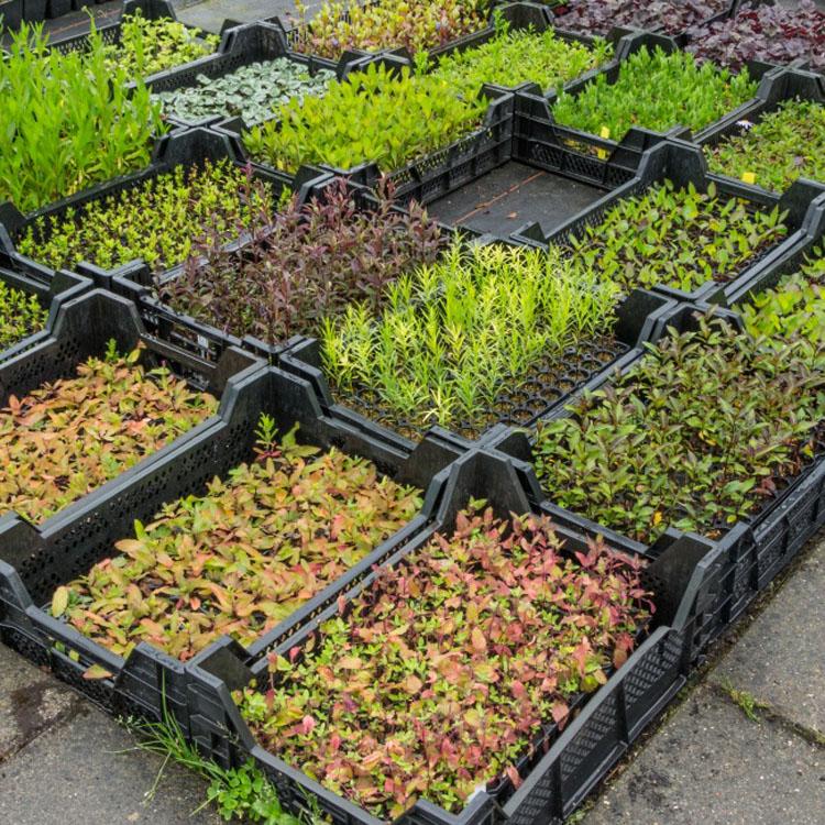 13 ideas originales que todo jardinero sueña con realizar