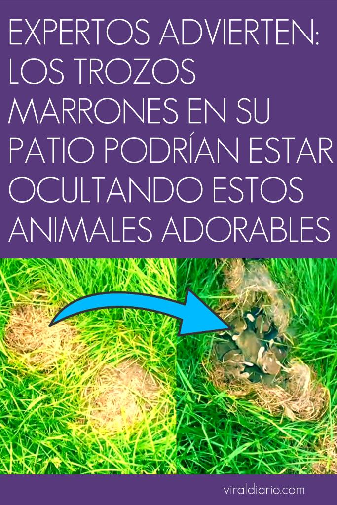 Expertos advierten: los trozos marrones en su patio podrían estar ocultando estos animales ADORABLES